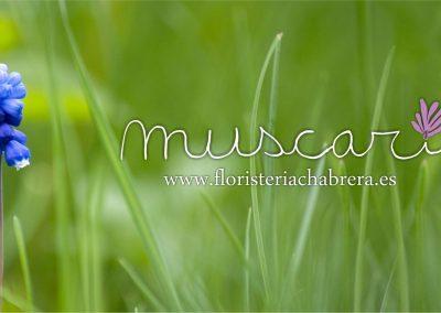 Logo Muscari verde