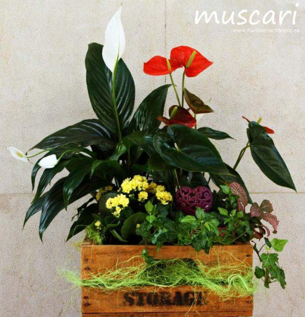 Caja de madera con plantas naturales