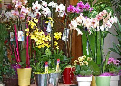 Tienda de flores en Castellón