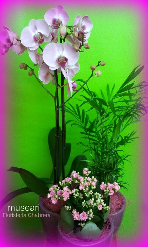 Cerámica con orquídea y plantas de interior