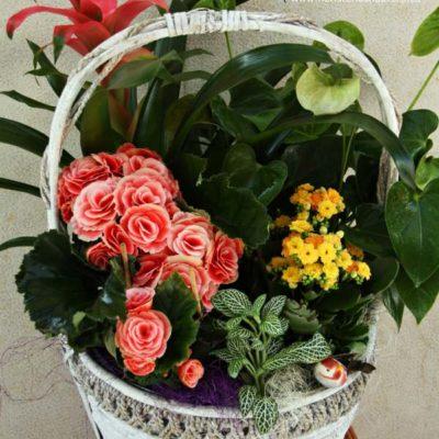 Cesta con plantas de floración