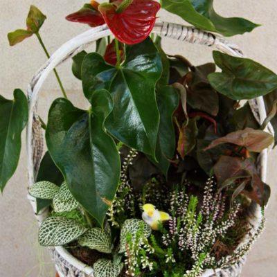 Cesta de mimbre con plantas verdes de interior