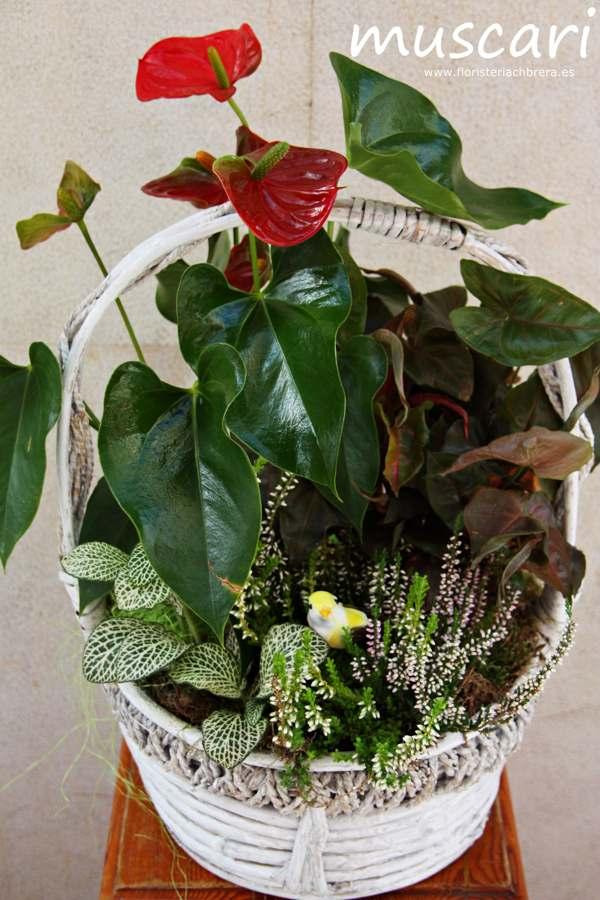 cesta de mimbre con plantas verdes de interior - Plantas Verdes De Interior