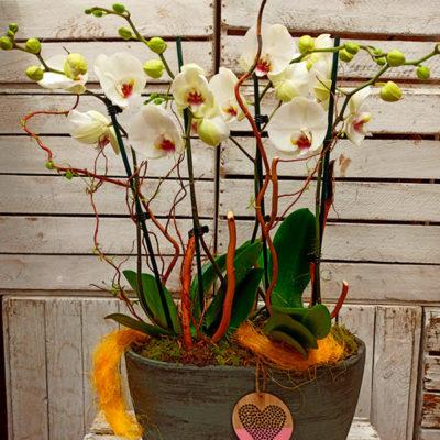 Centro diseño Orquídeas
