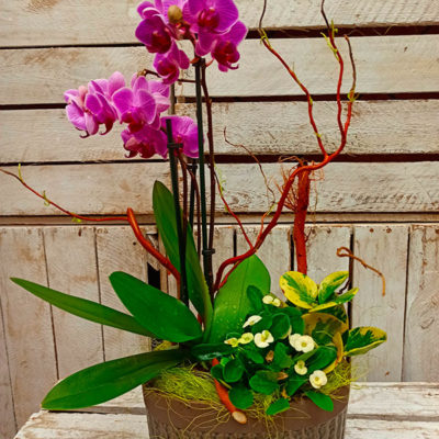 Centro Orquídeas Little