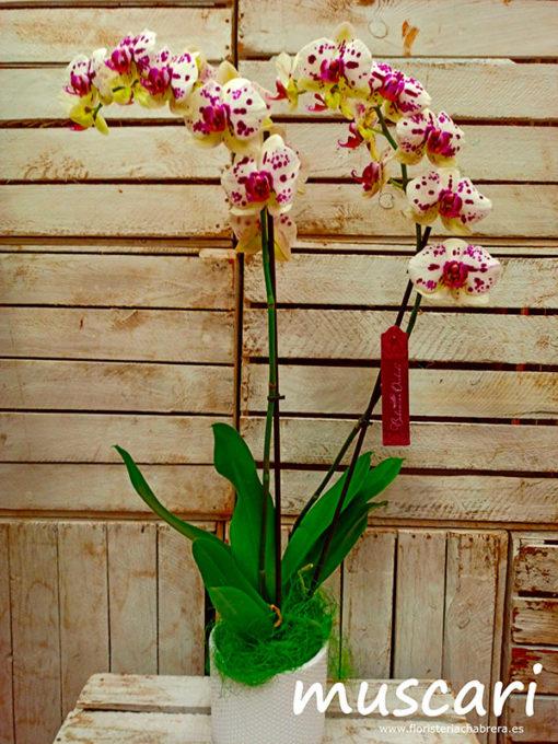 Orquídea Cerámica