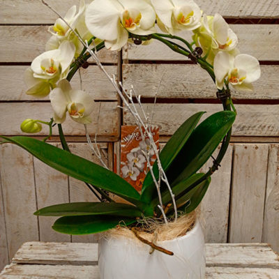 Orquídea circular