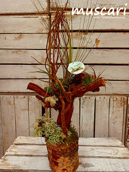 Tillandisia árbol pequeña